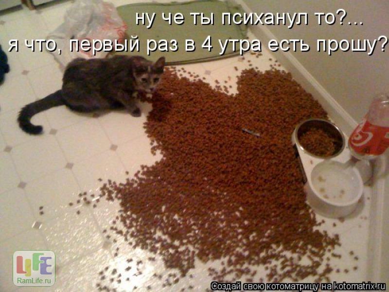 http://www.ramlife.ru/img/0001/191-4a6b42bd_800.jpg