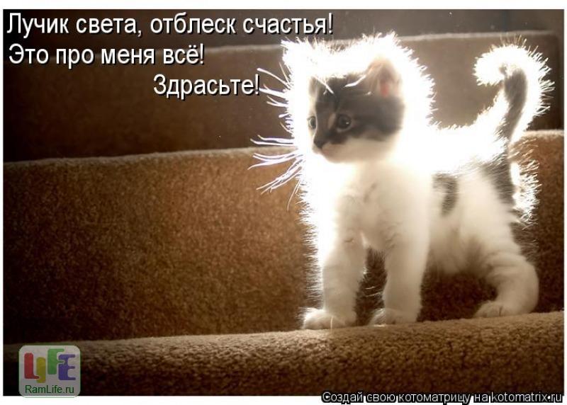 Коты Смешные коты картинки.