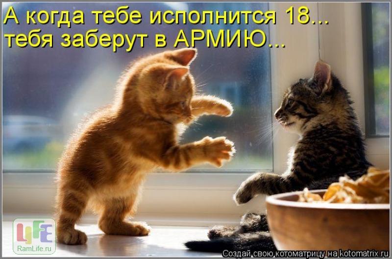Лучшие котоматрицы прошлой недели (50 фото) .