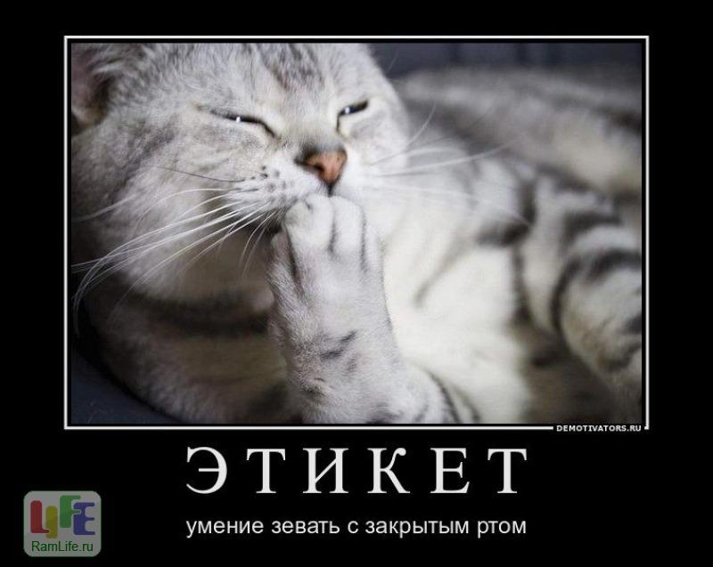 """Картинка """"этикет"""", картинки, прикольные картинки, фотоприколы, демотиваторы Joke4you.net - Развлекательный портал, картинки, цит"""